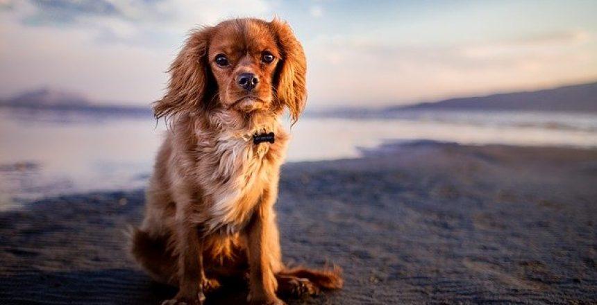 dog-1854119_640