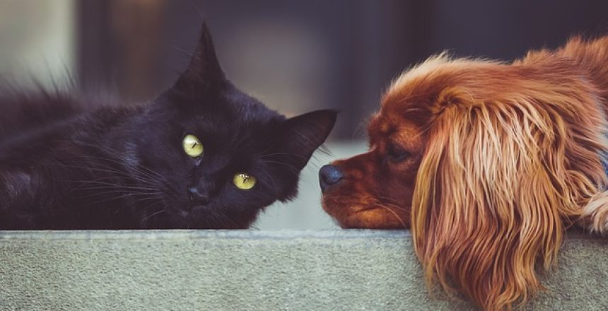אוכל לכלבים וחתולים